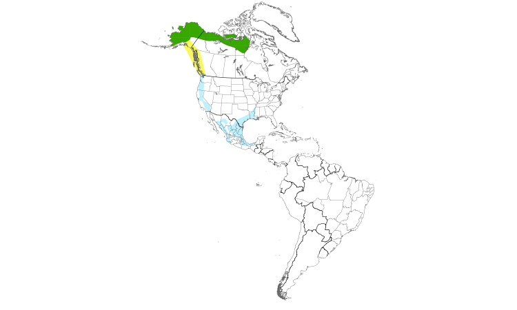 Range Map (Americas): Greater White-fronted Goose