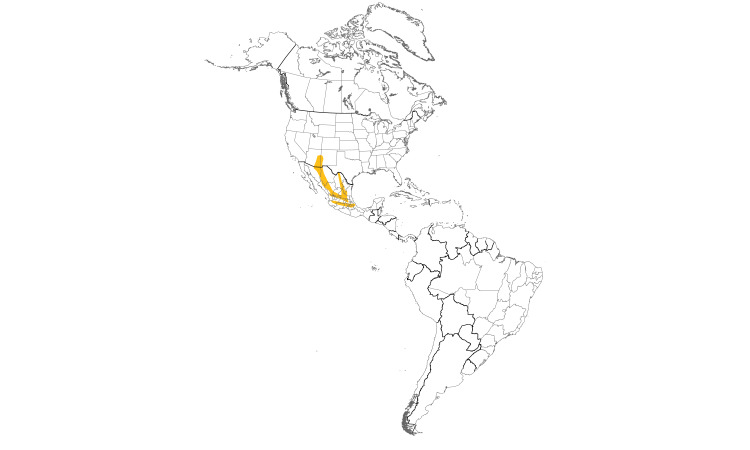 Range Map (Americas): Mexican Jay