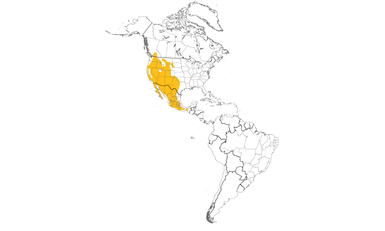 Range Map (Americas): Canyon Wren