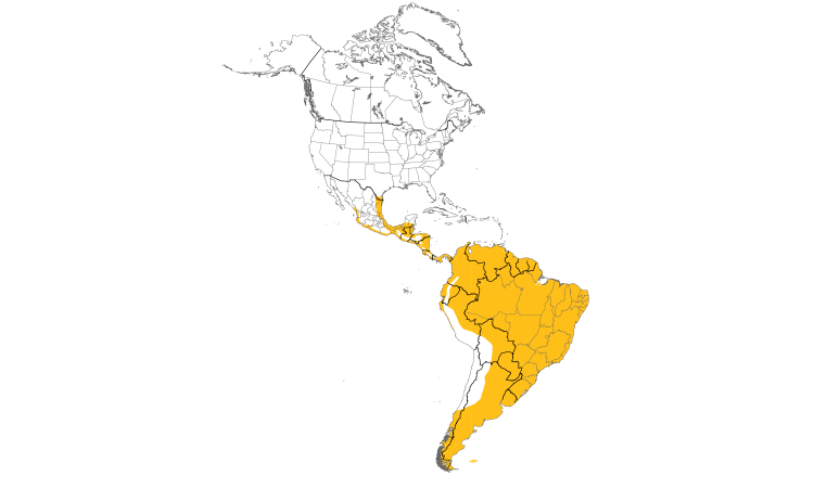Range Map (Americas): Ringed Kingfisher