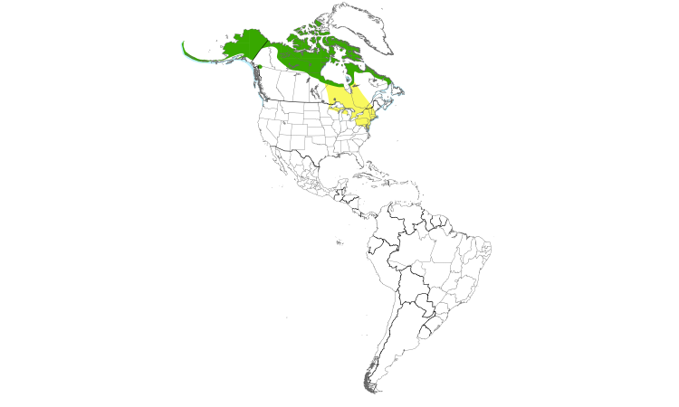 Range Map (Americas): Long-tailed Duck