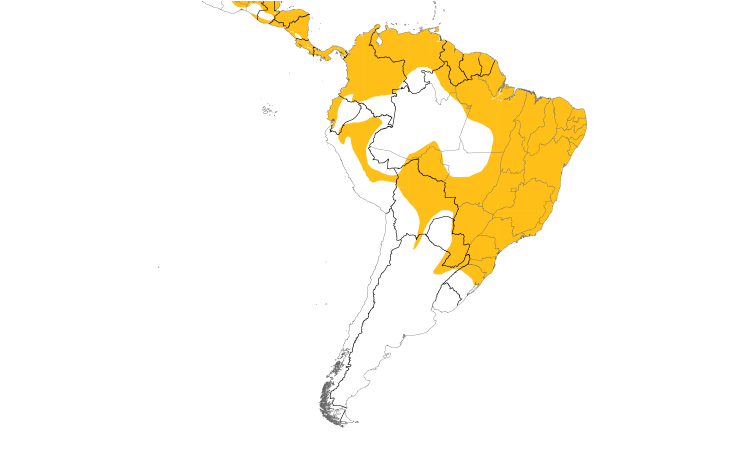 Range Map (South): Yellow-bellied Elaenia
