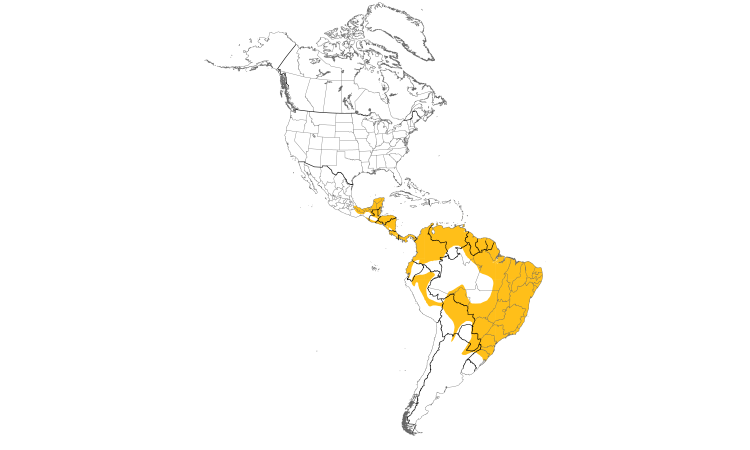 Range Map (Americas): Yellow-bellied Elaenia