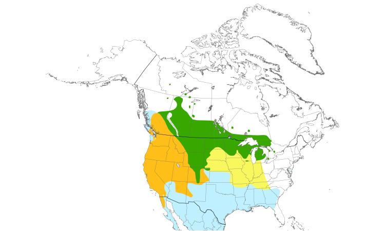 Range Map (North): Brewer's Blackbird
