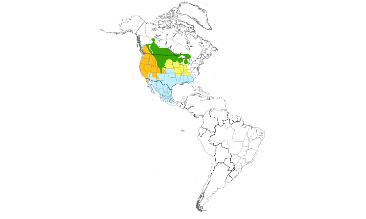 Range Map (Americas): Brewer's Blackbird