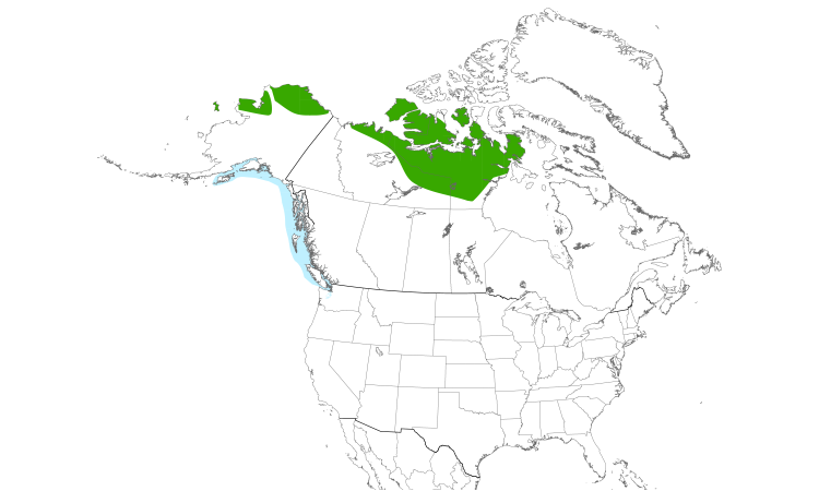 Range Map (North): Yellow-billed Loon