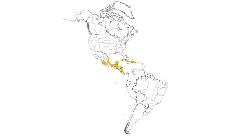 Range Map (Americas): Northern Jacana