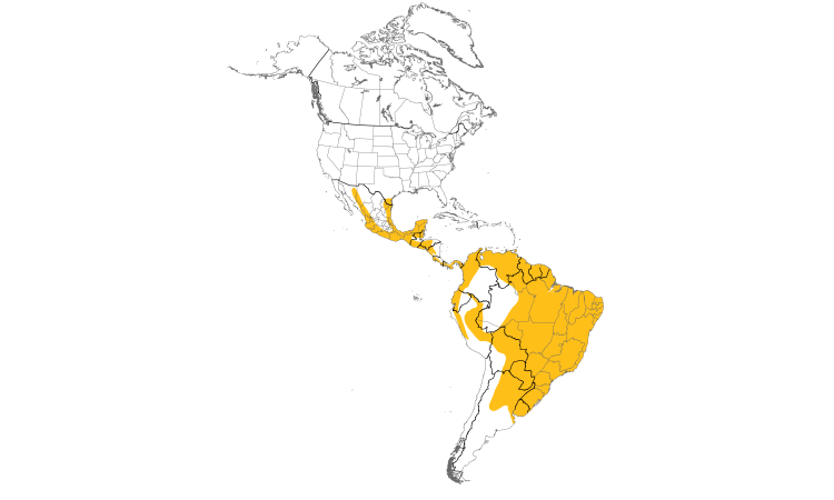 Range Map (Americas): White-tipped Dove