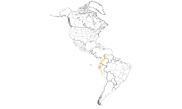Range Map (Americas): Flavescent Flycatcher