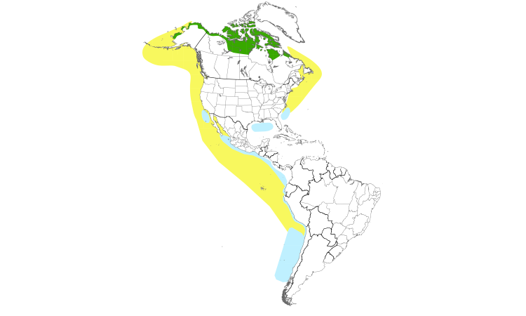 Range Map (Americas): Red Phalarope