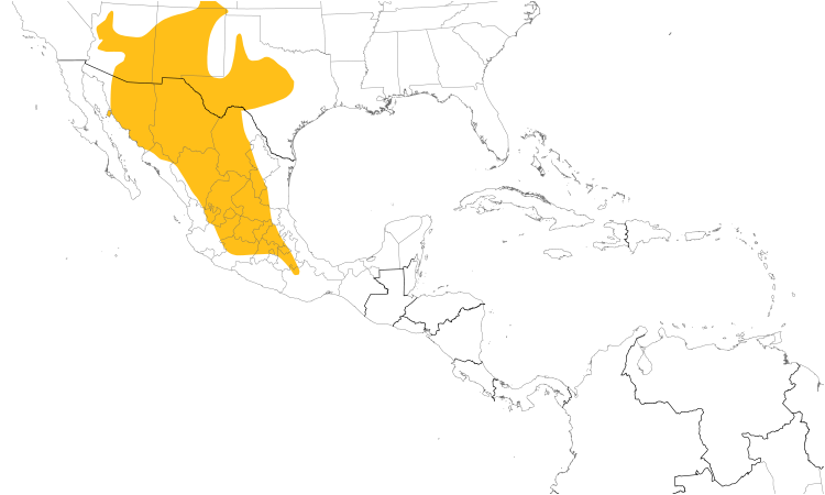 Range Map (Central): Canyon Towhee