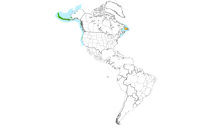 Range Map (Americas): Common Murre