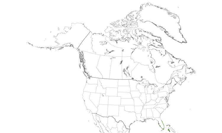 Range Map (North): Black-whiskered Vireo