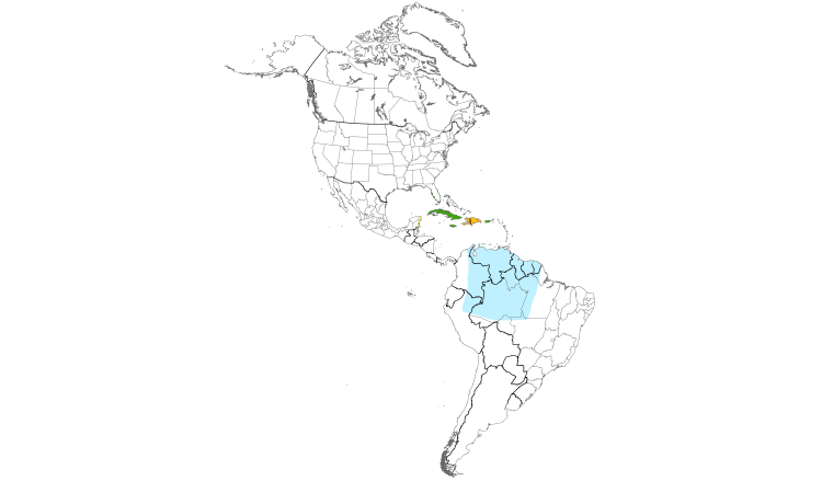 Range Map (Americas): Black-whiskered Vireo