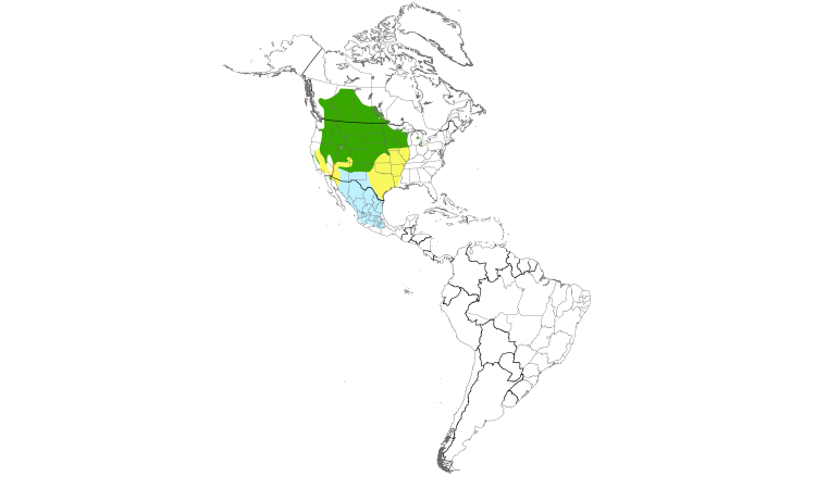 Range Map (Americas): Yellow-headed Blackbird
