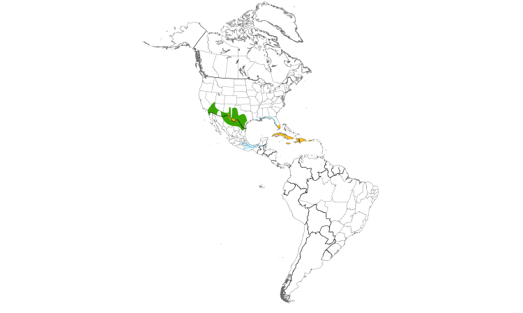 Range Map (Americas): White-winged Dove