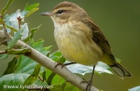Photo: Palm Warbler